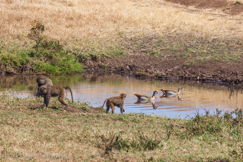 Ngorongoro-41.jpg