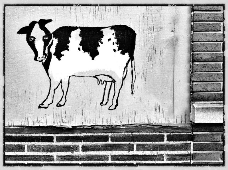 moo (iPhoneography)