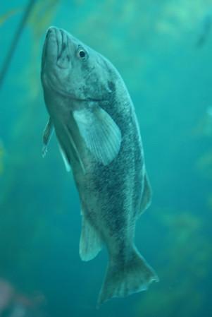 2010-11-15 aquarium monterey