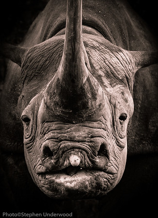 Masai Mara   Monochrome Images