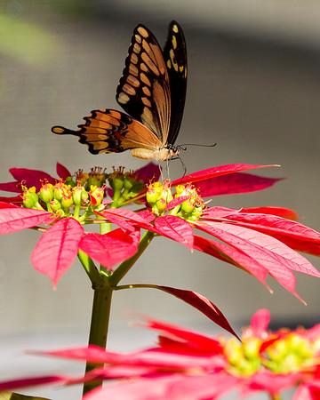 Butterfly World 12/2010