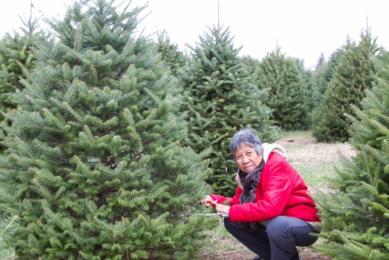 Christmas_2015-13.jpg