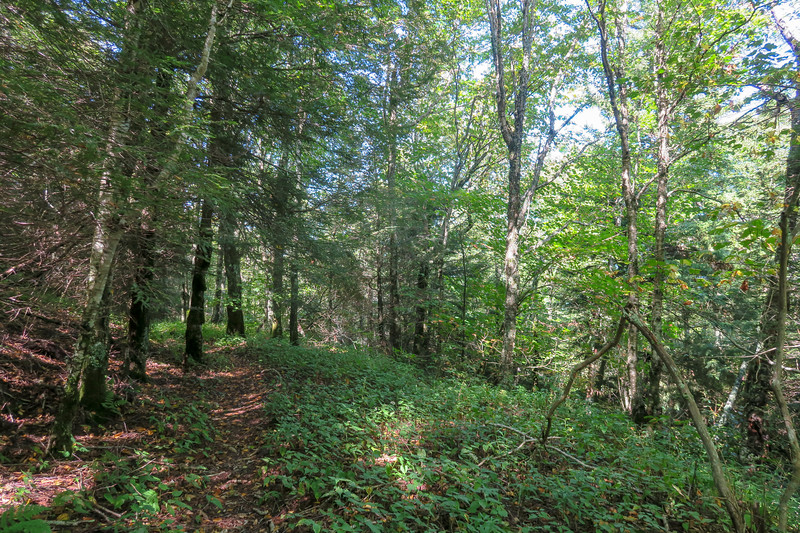 Fork Mountain Trail -- 5,470'