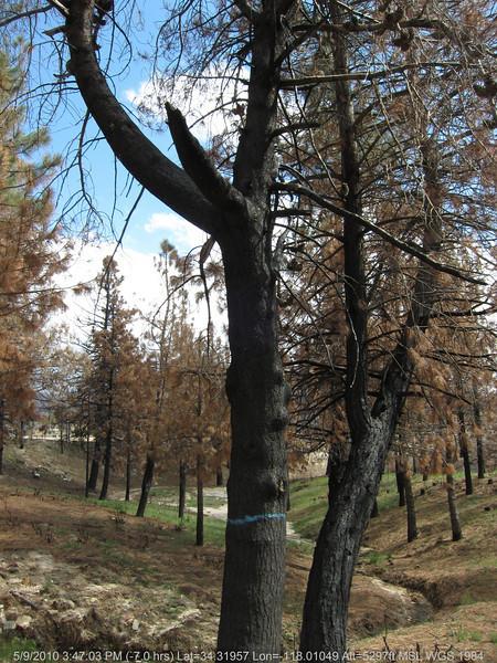 20100509234-Trail Recon, Chilao.JPG