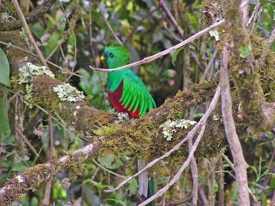 Costa Rica Birding Trip - March 2005
