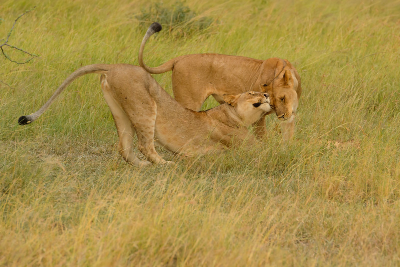 20160214__KET7145_Serengeti_Day_6.jpg