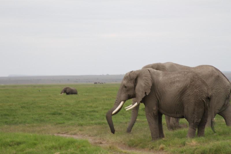 Kenya 2019 #2 1591.JPG