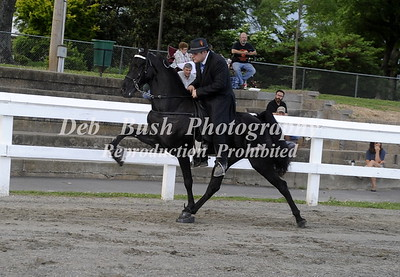 CLASS 5 THREE YR OLDS  OPEN