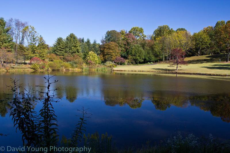 meadowlark 10-17-10-32.jpg