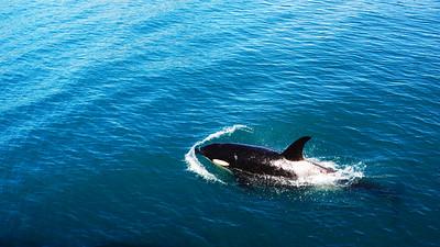 07-04 Seward Kenai Fjords Cruise