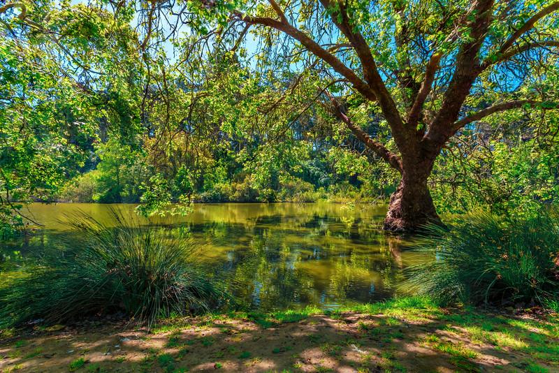 Tree02_EF16-40L.jpg