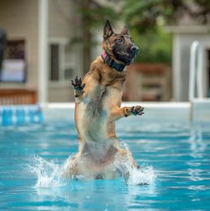 Splash 11