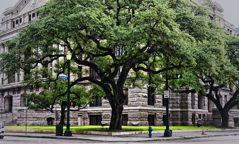 Courthouse Oak DSC_4332-Edit-2-21.jpg