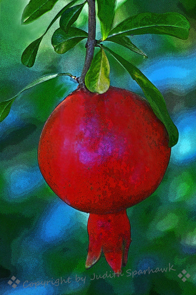 Ruby Fruit