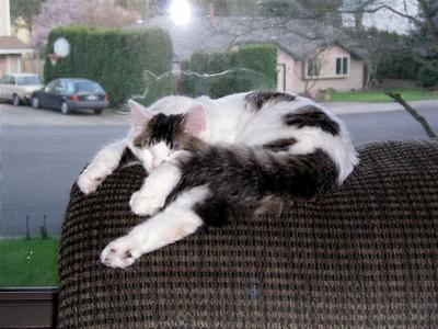 Cat equilibrium