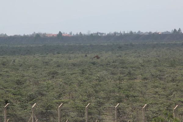 Nairobi Park Safari
