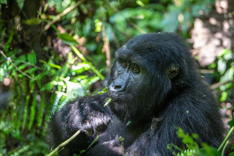 Uganda_T_Gor-149.jpg