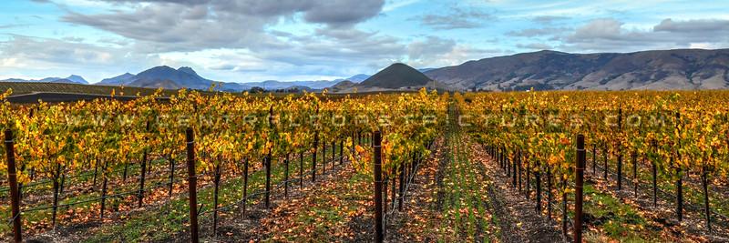 pano-edna-valley-vineyard_9017.jpg