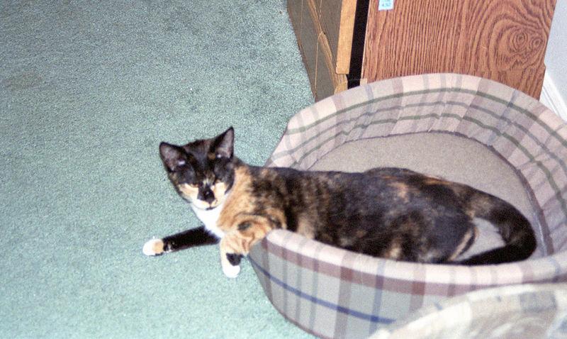 2003 12 - Cats 09.jpg