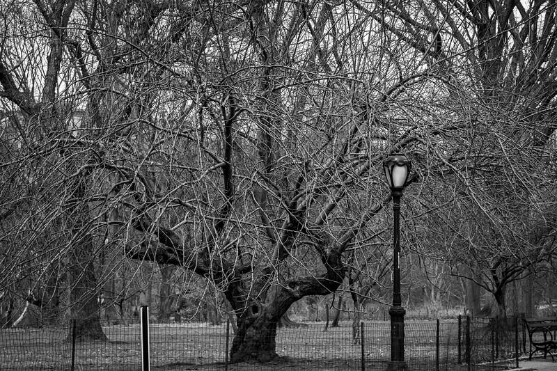 central park tree bw-2903.jpg
