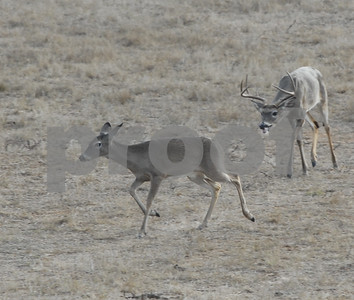 everything-is-aligned-for-a-good-antler-year-in-texas