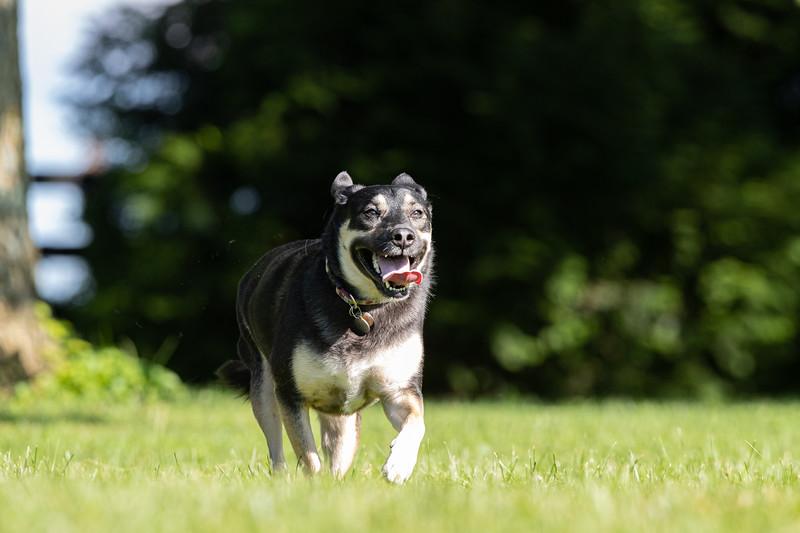 19_0712_dogs_ww-0364.jpg