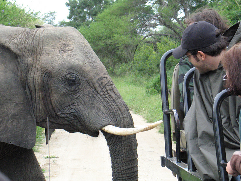 Included this photo to show how close we got to the animals, in a lot of cases really close.