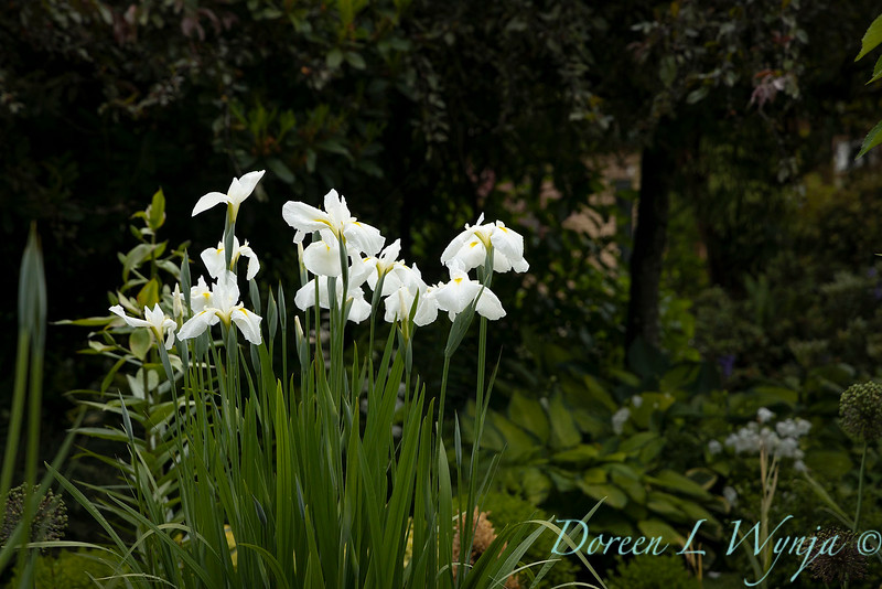 Froggsong Gardens_6080.jpg