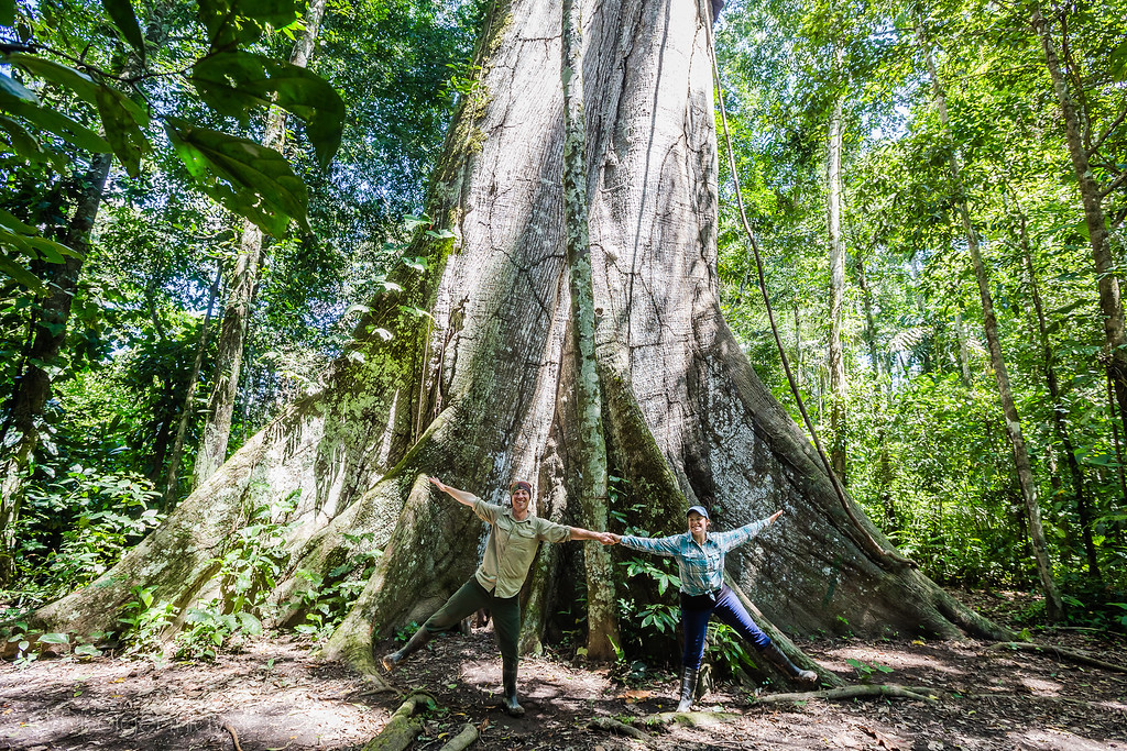 Posada Amazonas - Rainforest Expeditions - Cieba Tree - Lina Stock