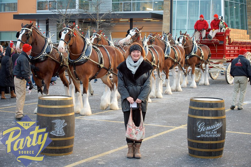 Clydesdale Portraits 306.jpg