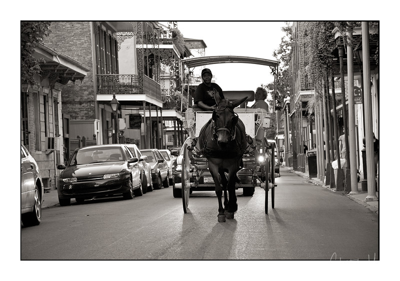 """french quarter """"horse"""".jpg"""