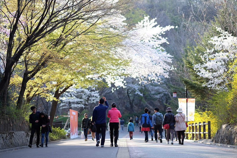 Namsan_Cherry_Blossoms_PhotoWalk-0054.jpg