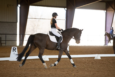 Horse 60