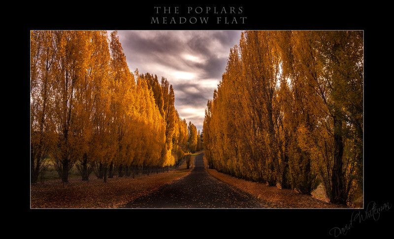The Poplars at Meadow Flat