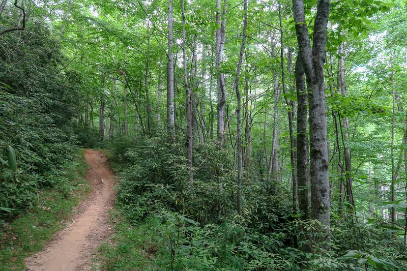 Grassy Road Trail -- 2,480'