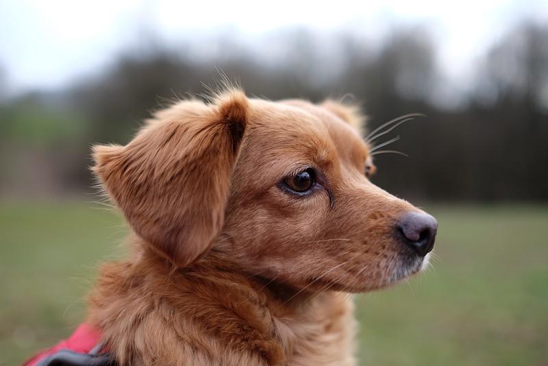 Portrait von Mika