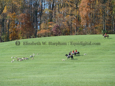 Foxhunting - Fall and Winter 2010/2011