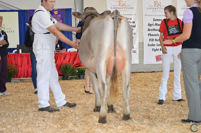 Northeast National Brown Swiss Cow Show 2017