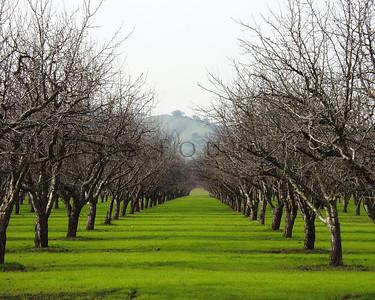 Vacaville, California & surrounding area