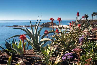 Treasure Island; Laguna Beach