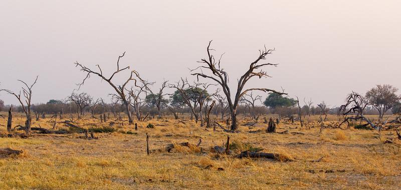 Botswana_0818_PSokol-2868.jpg