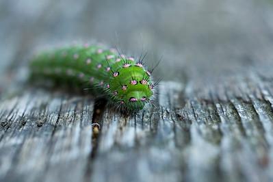 Butterflies,Caterpillars and Dragonflies