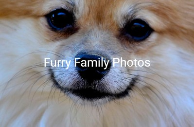 Furry Family Photo Gallery