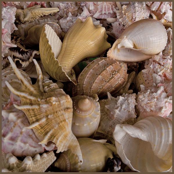 WEB OB shells 5402 .jpg