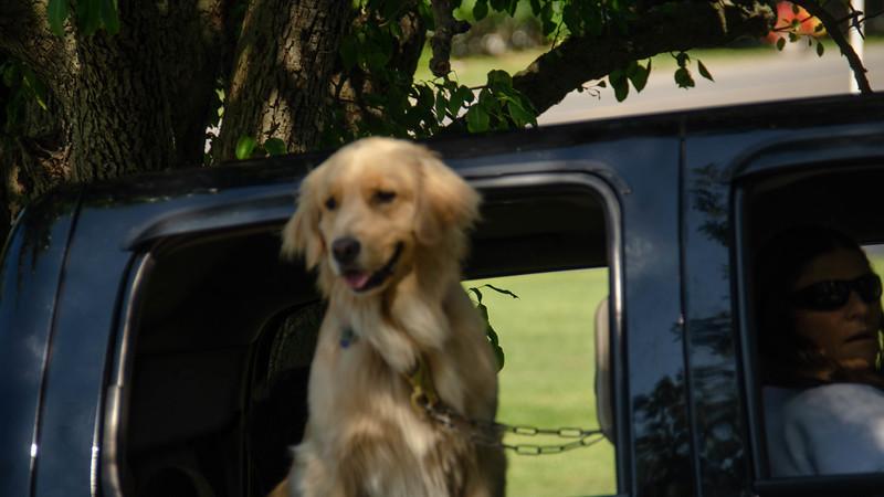 PuppyParty18-517.jpg