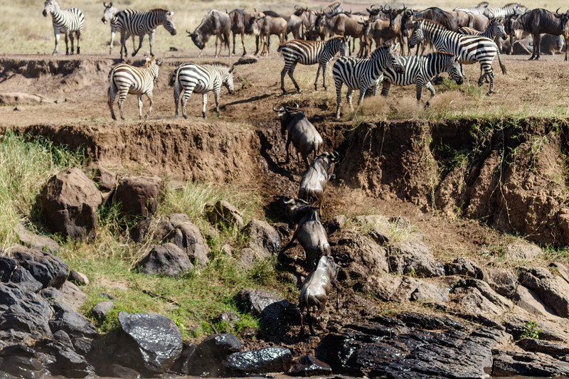 Kenya 2015-02606.jpg