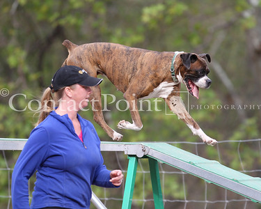 Contact Point AKC Agility Trial Feb 2012 - Saturday