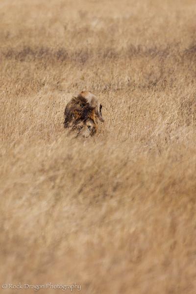 Ngorongoro-68.jpg