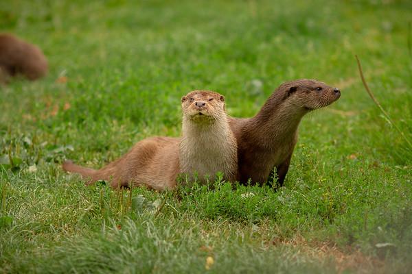 2020 - Otters 001