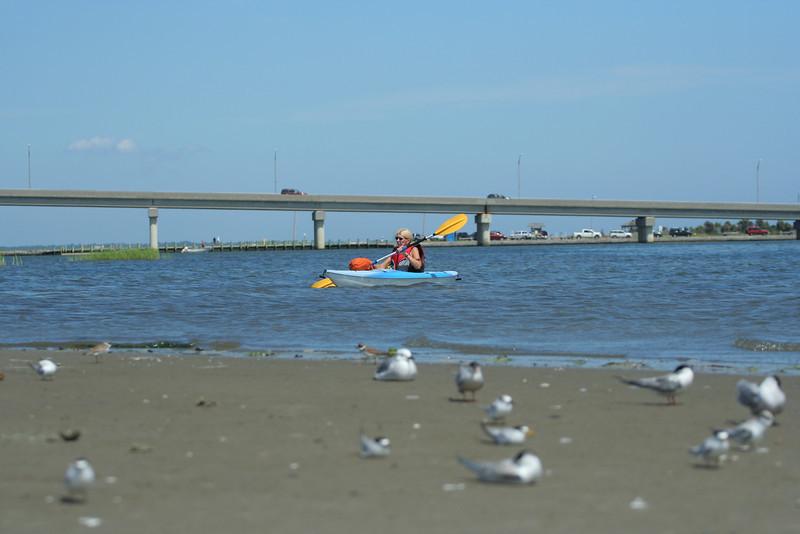 Kayaking off Road K, Hampton Bays.